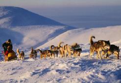 Hundeschlittentour Finnland